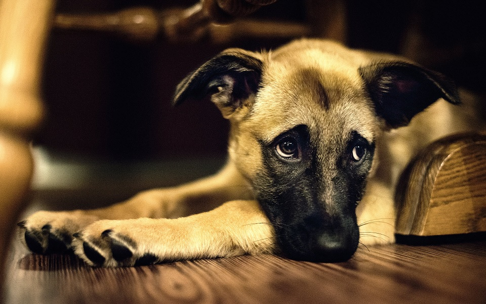 Se você está estressado seu cão provavelmente também estará